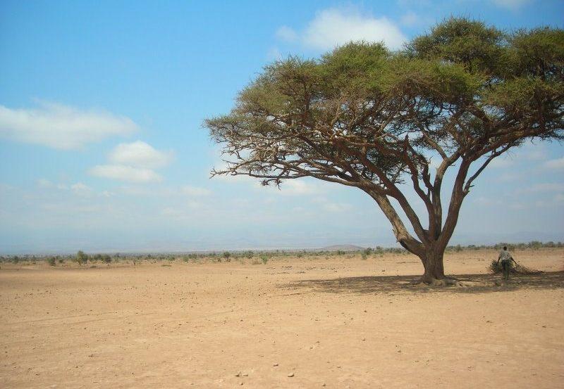 Restructurer les stratégies de croissance pour l'atteinte des ODD en Afrique
